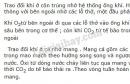 Bài 4 trang 75 SGK Sinh học 11
