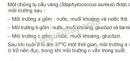 Bài 1 trang 108 SGK Sinh học 10