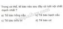 Bài 4 trang 39 SGK Sinh học 10