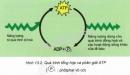 Bài 4 trang 56 SGK Sinh học 10