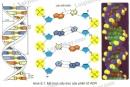 Quan sát hình 6.1 và mô tả cấu trúc của phân tử ADN.