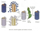 Bài 3 trang 118 SGK Sinh học 10