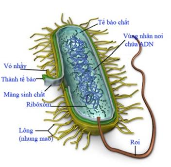 Sơ đồ cấu trúc tế bào vi khuẩn