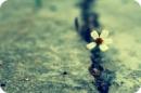 Sức mạnh nào giúp con người bớt đi những lo âu, sợ hãi và đau khổ? - Ngữ Văn 12