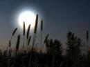 Cảm nhận của em về đoạn thơ sau trong bài Ánh trăng