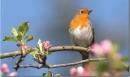 Hãy phân tích đoạn thơ sau: Ta làm con chim hót…Dù là khi tóc bạc. Trích trong bài Mùa xuân nho nhỏ của Thanh Hải.