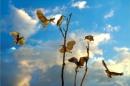 Mùa xuân thiên nhiên, đất nước và cảm xúc của Thanh Hải trong đoạn thơ trích trong bài Mùa xuân nho nhỏ: Mọc giữa dòng sông xanh…Cứ đi lên phía trước.