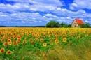 Bình giảng đoạn thơ trong bài Vội vàng của Xuân Diệu: Tôi muốn tắt nắng đi...Tôi không chờ nắng hạ mới hoài xuân