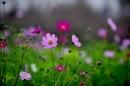 Binh giảng bài thơ Vội vàng của Xuân Diệu