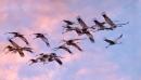 Bàn về cái đẹp trong xã hội và trong thiên nhiên - Ngữ Văn 12