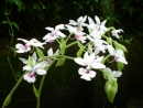 Giới thiệu một loại hoa ở địa phương.
