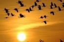 Phân tích Vội vàng để thấy quan niệm sống của Xuân Diệu