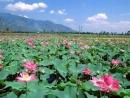 Nỗi lòng Nguyễn Trãi qua bài thơ Cảnh ngày hè
