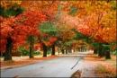 Hãy viết một bài văn biểu cảm về mùa thu, trong đó có sử dụng yếu tố nghị luận