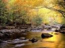 Bài 2: Em hãy viết một bài văn biểu cảm về mùa thu trong đó có sử dụng yếu tố nghị luận