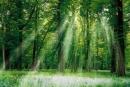 Lấy chủ đề: Vai trò của rừng đối với đời sống con người. Em hãy viết một số đoạn văn làm sáng tỏ chủ đề trên