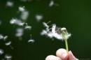 Nhà thơ Tố Hữu từng viết: Ôi sống đẹp là thế nào hỡi bạn?. Em hãy viết bài văn thể hiện những suy nghĩ của mình về vấn đề  nhà thơ đã nêu ra