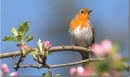 Viết đoạn văn nêu cảm nhận của em về nhan đề bài thơ Mùa xuân nho nhỏ của nhà thơ Thanh Hải