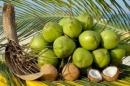 Thuyết minh về cây dừa.