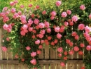 Loài hoa em yêu