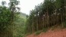 Viết bài văn ngắn miêu tả hình ảnh những hàng cây của quê hương em vào buổi sáng sớm
