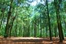 Tả một cánh rừng.