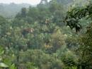 Viết bài văn thuyết minh về vai trò của rừng đối với sự sống con người