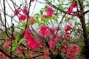 Giới thiệu một loài hoa (như hoa đào, hoa mai,...) hoặc một loài cây (như cây chuối, cây na...).