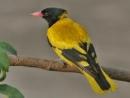 Viết bài văn ngắn thuyết minh về một loài chim mà em yêu thích