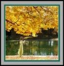 Bình giảng khổ thơ sau đây trong bài Đây mùa thu tới: Rặng liễu...dệt lá vàng.