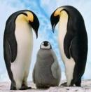 """Anh (chị) suy nghĩ như thế nào về câu nói: """"Nơi lạnh nhất không phải là Bắc Cực mà là nơi không có tình thương"""" - Ngữ Văn 12"""