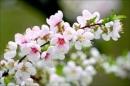 """Nghị luận: """"Giữa một vùng sỏi đá khô cằn, cây hoa dại vẫn mọc lên và nở những chùm hoa thật đẹp"""" - Ngữ Văn 12"""