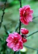 """Suy nghĩ của em về bài thơ """"Mùa xuân nho nhỏ"""" của Thanh Hải"""