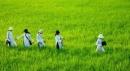 """Phân tích bài """"Đất nước"""" (trích trường ca Mặt đường khát vọng) của Nguyễn Khoa Điềm - Ngữ Văn 12"""