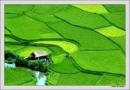 Đất Nước qua dòng suy tưởng của nhà thơ Nguyễn Khoa Điềm - Ngữ Văn 12