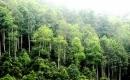 Phân tích hình tượng cây xà nu trong Rừng xà nu