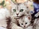 Thuyết minh về con mèo