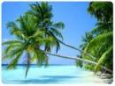 Thuyết minh về cây dừa_bài 2