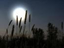 Tả một đêm trăng đẹp_bài 1