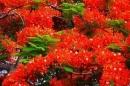 Mùa hè đến rực rỡ hoa phượng và tiếng ve kêu râm ran. Em hãy tả lại cảnh này và nói lên cảm tưởng của mình khi mùa hè đến