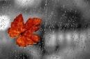 Tả cơn mưa đầu mùa