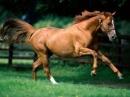 Tả con ngựa