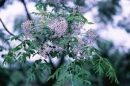 Tả lại một loại cây vào dịp tết mùa xuân