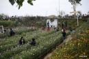 Tả khu vườn nhà em
