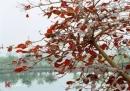 Tả quang cảnh mùa thu