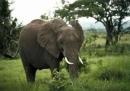 Tả con vật Tập làm văn – Tả con vật – tả một con vật nuôi trong vườn thú.