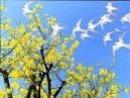 Viết một đoạn văn ngắn để tả về mùa xuân