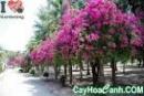 Ở vườn (hoặc công viên) các luống hoa (chậu hoa) nở bông rất đẹp. Hãy tả một cây hoa mà em thích nhất