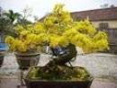 Tả lại vẻ đẹp của cây hoa đại (bông sứ), hoa đào hoặc hoa mai vào một buổi nào đó trong ngày