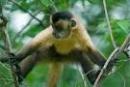 Tả con khỉ trong vườn thú